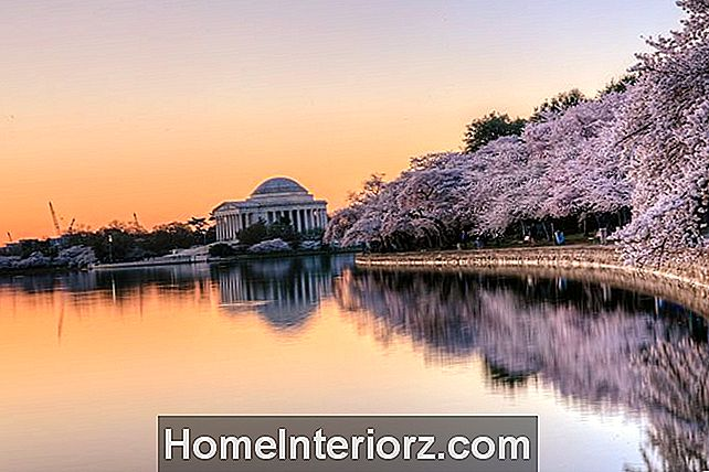 Jefferson Memorial auringonnousu