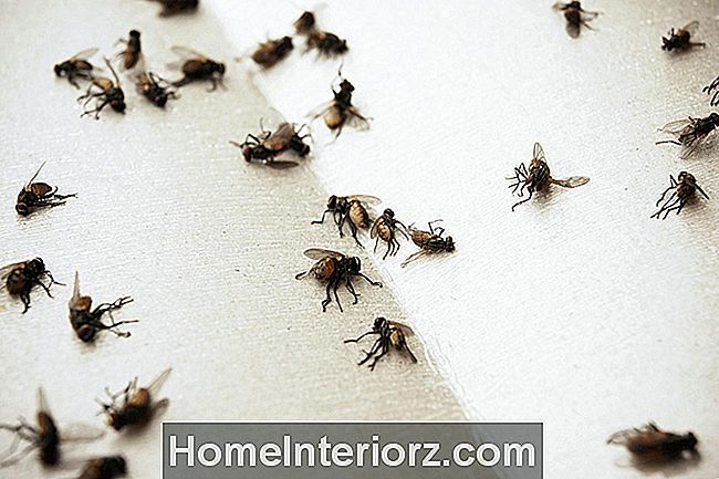 5 Trinn for Indoor House Fly Control