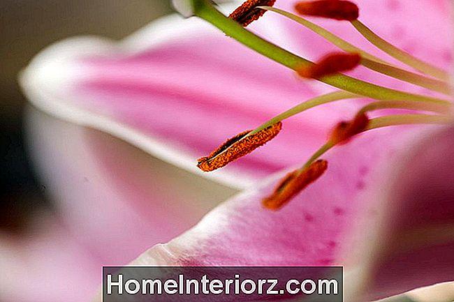 Bevorzugt Entferne Gelbe Pollenflecken Von Kleidung, Teppich Und Polster DS72