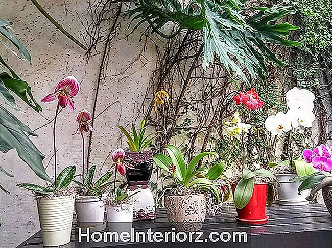 Potted Orchid Collection