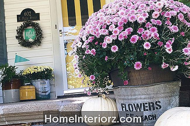 Fall Flowers Purple Mums Porch