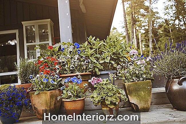 5 Elements of Successful Container Gardening