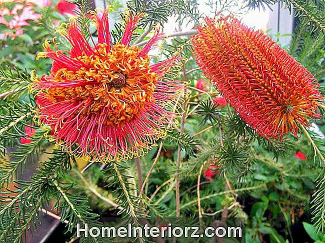 protea-lilled