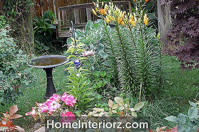 Birdscaped Yard con Bird Bath
