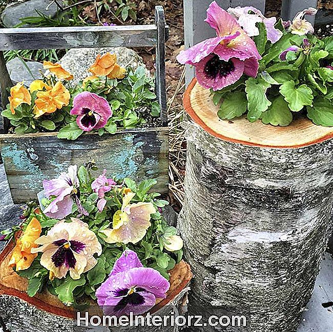 Log Planters med pansies