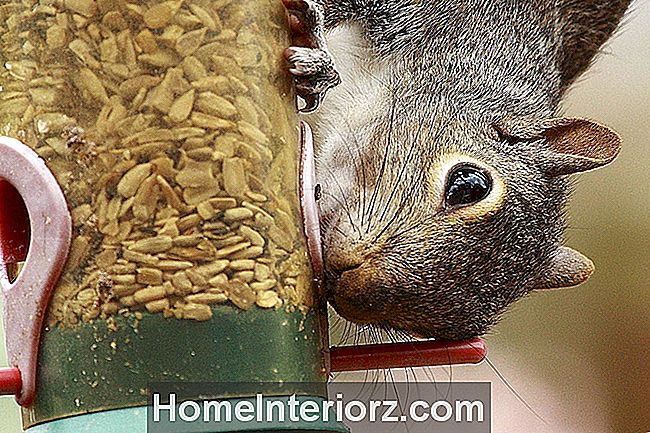 Como Squirrel-Proof a Bird Feeder