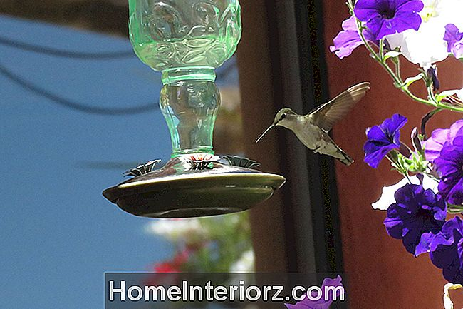 Hummingbird Feeder Placeringstips