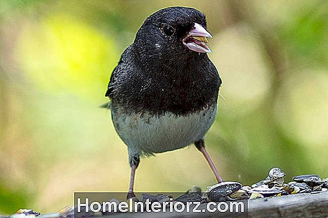 Junco pie Bird Feeder