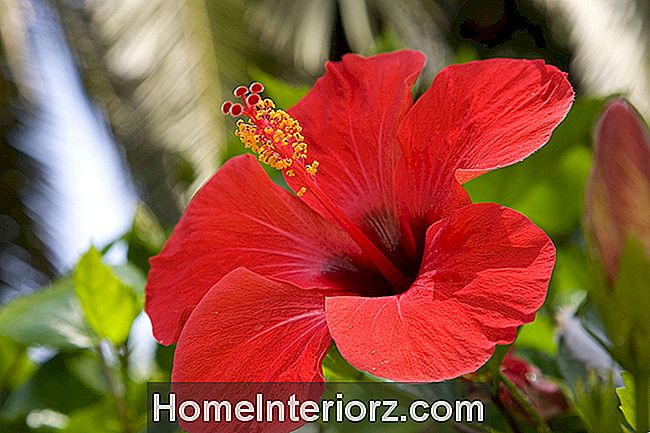 Top Houseplants Com Flores Vermelhas