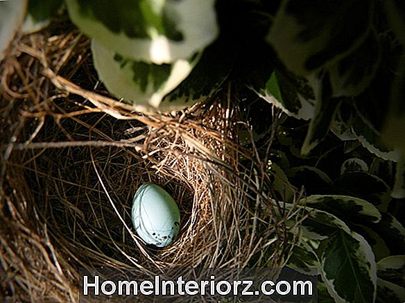 Colonial Definition - Bird Nesting