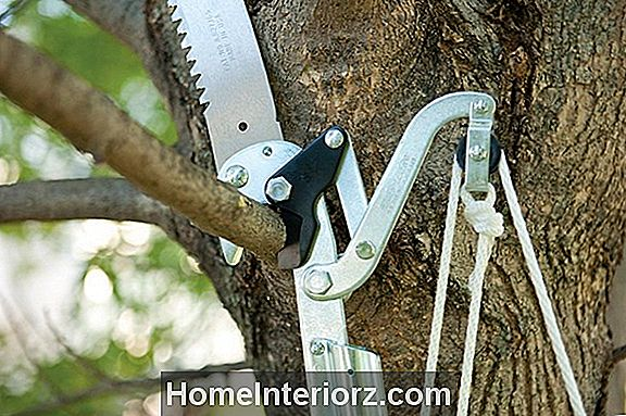 Pole Tree Pruners Review