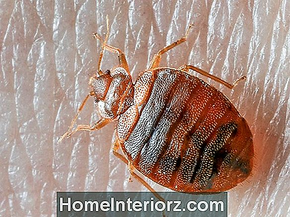 Do's and not of Bed Bug Control