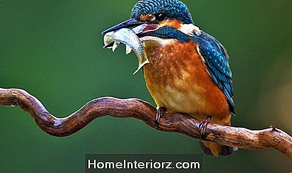 15 Fun Facts About Kingfishers