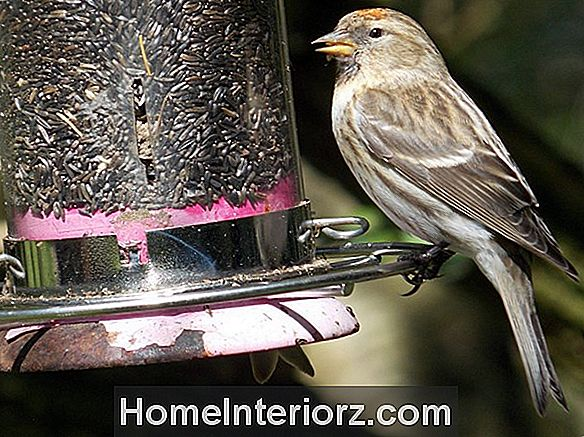 Bird Feeder Cleaning Tips