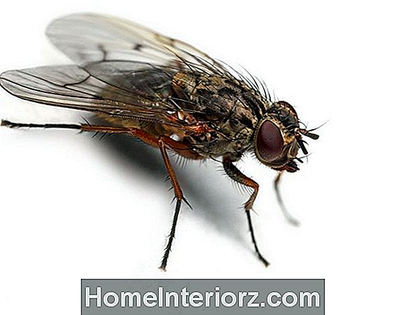 5 Askelta Indoor House Fly Control