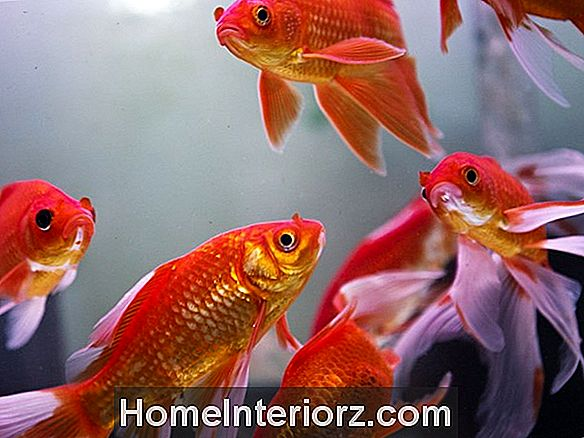 Feng Shui Aquariums Info: Sijainti Your Wealth Fish