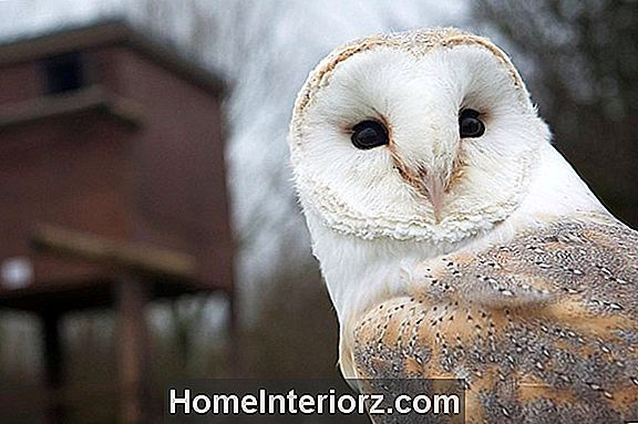 Barn Owl Boxes - Nesting Owls