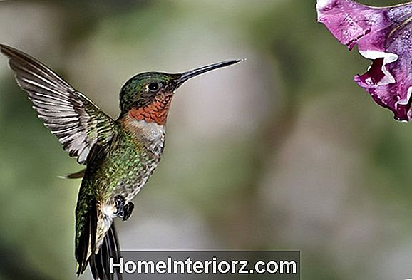 Top 10 Hummingbird Flowers