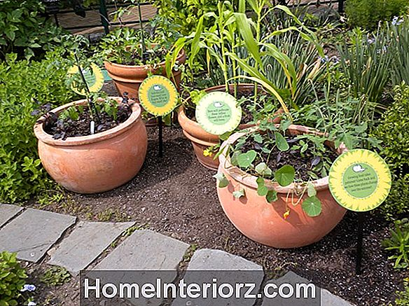 Companion Herbs For Tomato Gardens