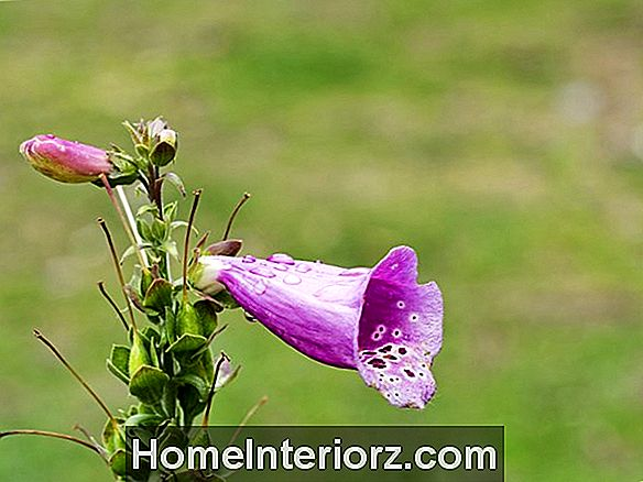 Deadheading Garden Flowers