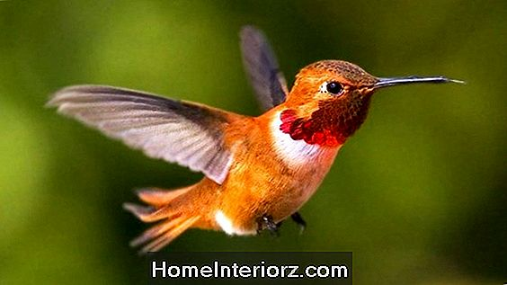 Hummingbird Nectar Recept