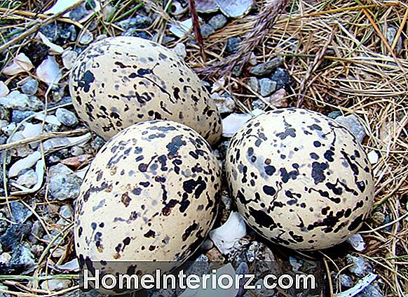 Wild Bird Egg Identification