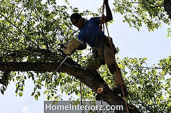 Hiring Tree Services