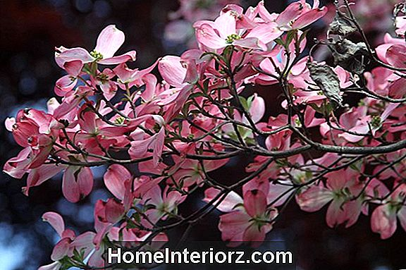 Top Hypoallergenic Trees Varieties