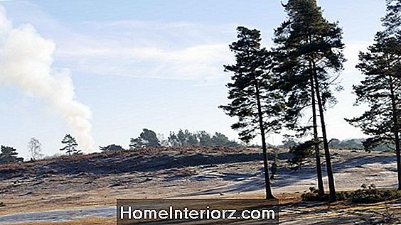 Winter Heaths och Heather Plants