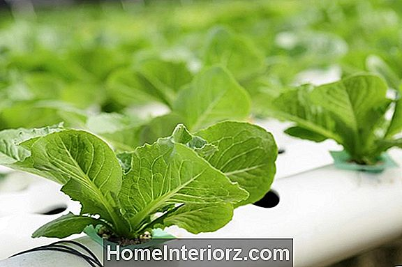 Hydroponic Nutrient Solution Basics