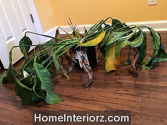 Repotting Your Houseplants